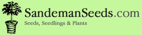 Sandeman Seeds | Tree seeds, Shrubs seeds, Grass seeds, Mediterranean plant seeds, Tropical plant seeds, Bonsai seeds, Herb seeds, Medicinal plant seeds, Aromatic plant seeds